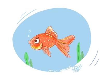 Mr. Angry goldfish