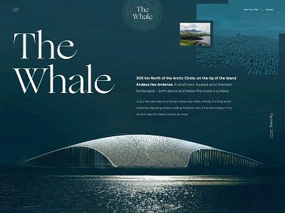 The Whale Arctic Pavilion science aquatic wildlife minimal norway web design ui clean landing page website architecture museum whale