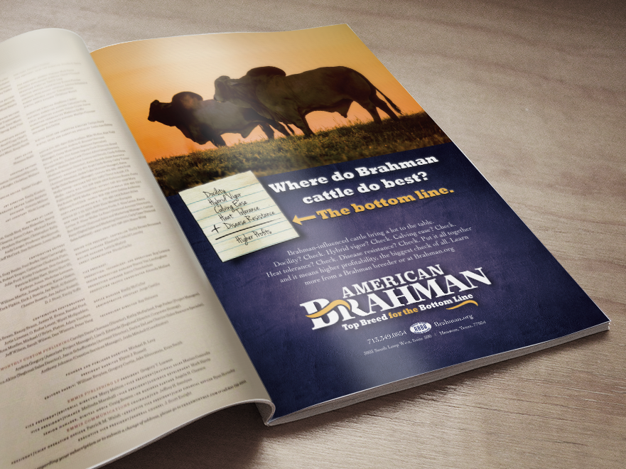 Photography, Ad Design for American Brahman Breeders Association logo design photography ad design ad