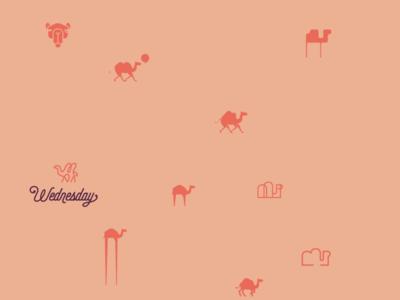 An Abundance of Camels