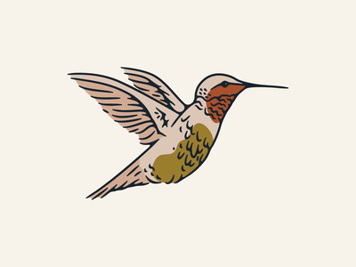 Hummingbird conscious consumerism sustainability colorado springs bird illustration nectar wings wildlife animal illustration hummingbird bird