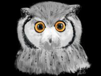 Indian eagle owl illustration