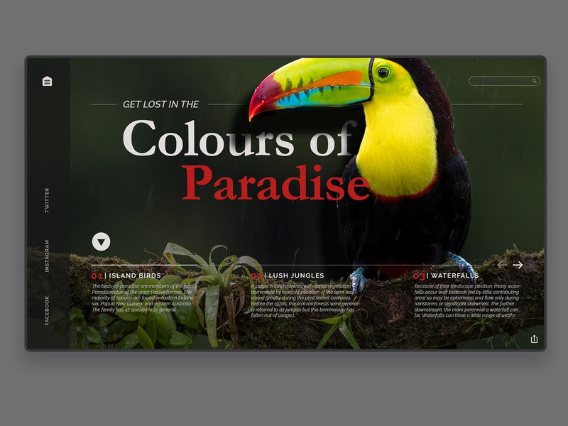 Colours of Dribbble travel tourism bird toucan nature ux designer concept uidesign landing page web website typography design ui