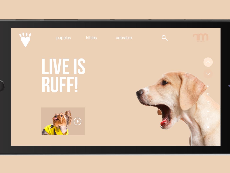 Daily UI design ux ui. web deisgn