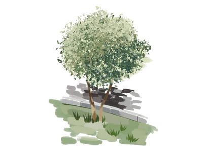 tree illustration art