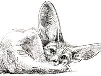 Fenec fox