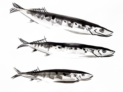 Saury fishes