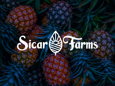 SicarFarms field landscape sunrise sun company logo fruits typogaphy symbol isotype brand identity brand design brand isologo