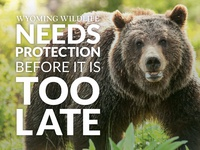 Wyoming Wildlife Advocates Postcard