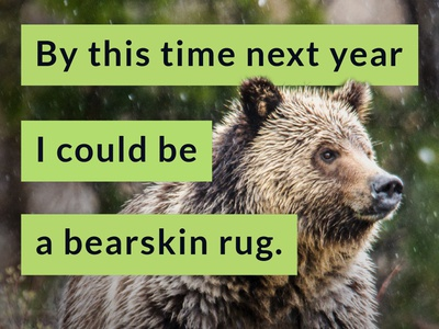 #NoGrizzlyHunt Campaign - Wyoming Wildlife Advocates hunting instagram social media advertising non-profit animals wildlife wyoming grizzly bear yellowstone lato