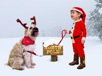 Merry Christmas, Dribbble