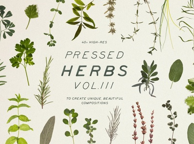 Pressed Dry Herbs Vol.3
