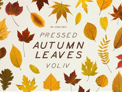 Pressed Autumn Leaves Vol.4