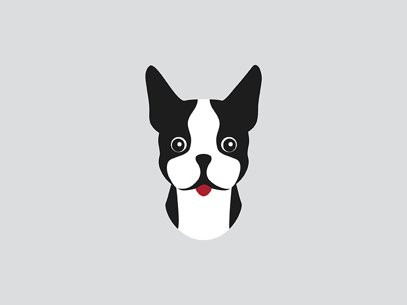 Boston Terrier illustration boston terrier dog