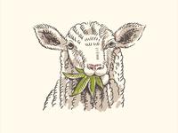 Sheep Weed