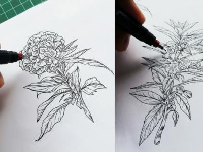 Botanic Illustration 02 inkwork illustration drawing flowers botanic
