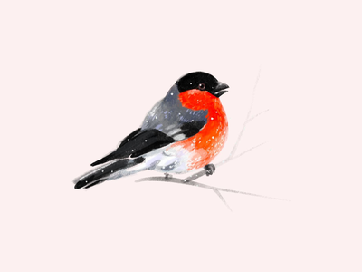 Christmas bullfinch snow bullfinch winter illustration bird procreate christmas