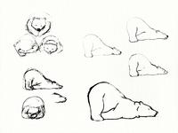 Hibernating Bear Sketches