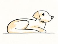dog study #2