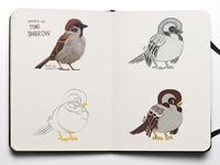 Sparrow Tomi