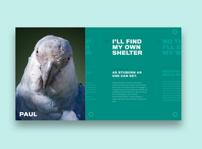 Spix Macaw: Website Teaser