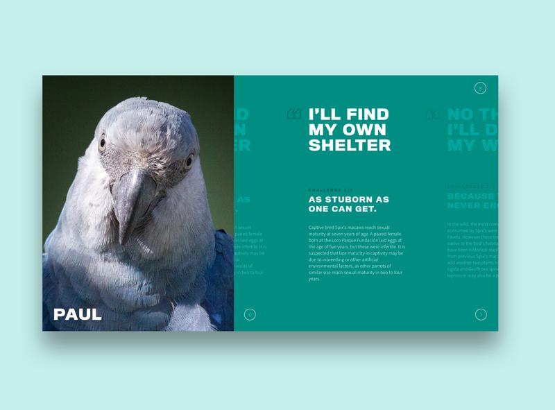 Spix Macaw: Website Teaser