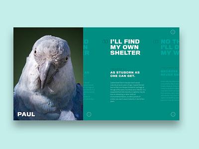 Spix Macaw: Website Teaser uxdesign uidesign