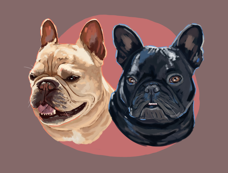 French Bulldogs cintiq portrait art portrait art pet illustration