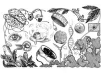 Chydenius media illustration