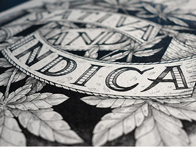 Canna typography line rotring illustration weed indica sativa