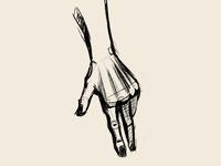 Hand Anatomy Study Exercise