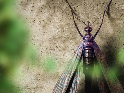 Insects zerokobo insects visualization illustration design render rhino3d keyshot 3d cgi