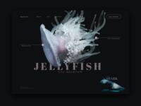 Website design | Aquarium