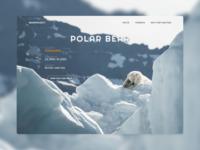 Website design | Polar bear