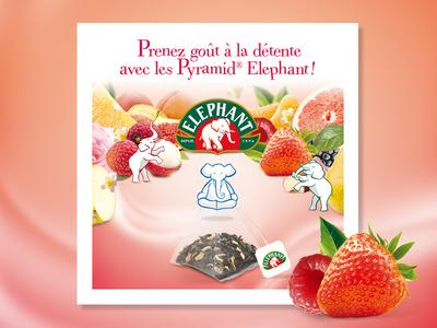 Elephant clean font branding typography modern tea fruits color food design print