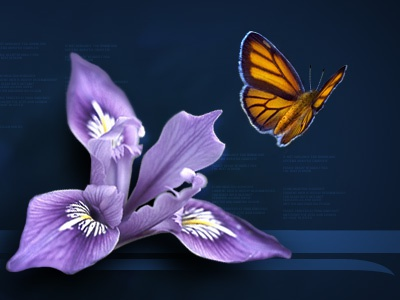 Pixelranger web nature butterfly flower flash