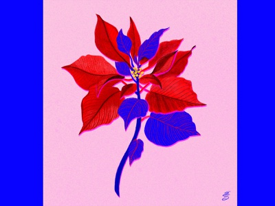 Poinsettia emily searle holidays red floral christmas