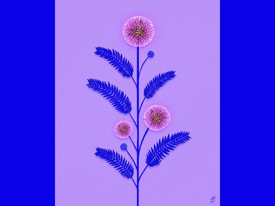 Mimosa digital emilysearle procreate illustrator blue pink emily searle sensitive plant flower mimosa