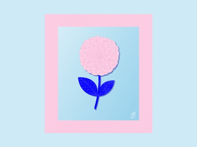 Dahlia blue procreate illustration flower illustration digital emilysearle emily searle floral flower pink
