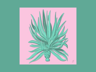 Agave agave plant green digital pink procreate emilysearle illustration emily searle