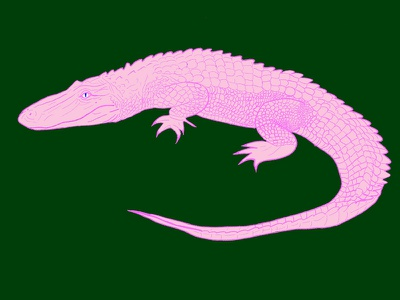 Everglades emilysearle illustration digital procreate pink green swamp everglades gator florida