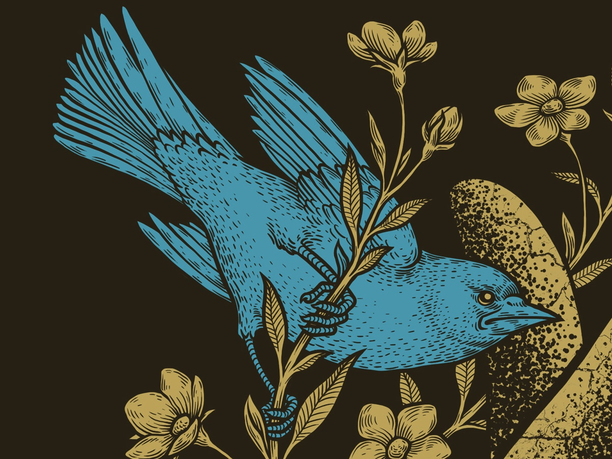 Bird birds illustration oleggert
