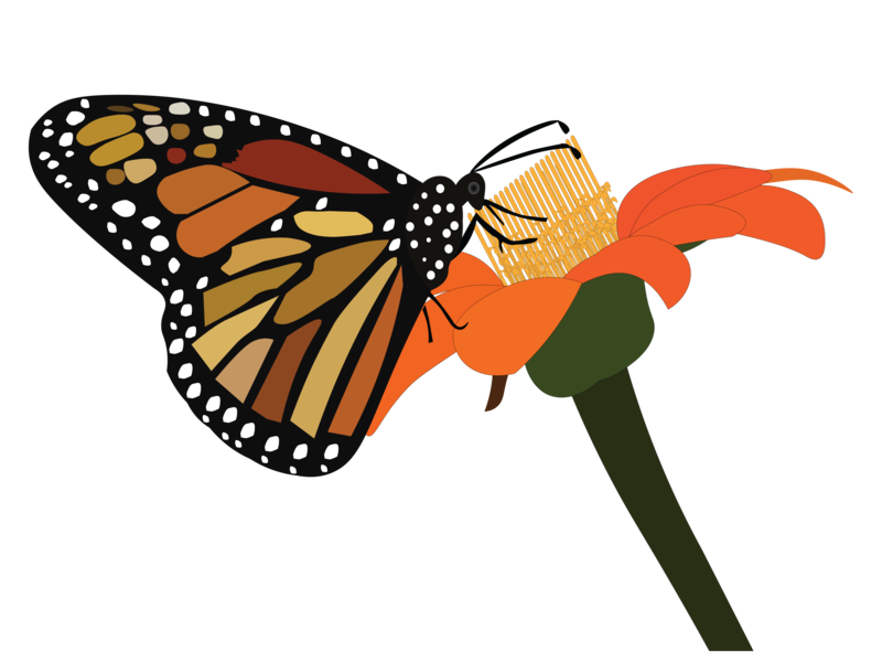 Butterfly with its flower illustration design