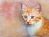 Cat in Colors