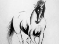 Pencil sketch_Hores