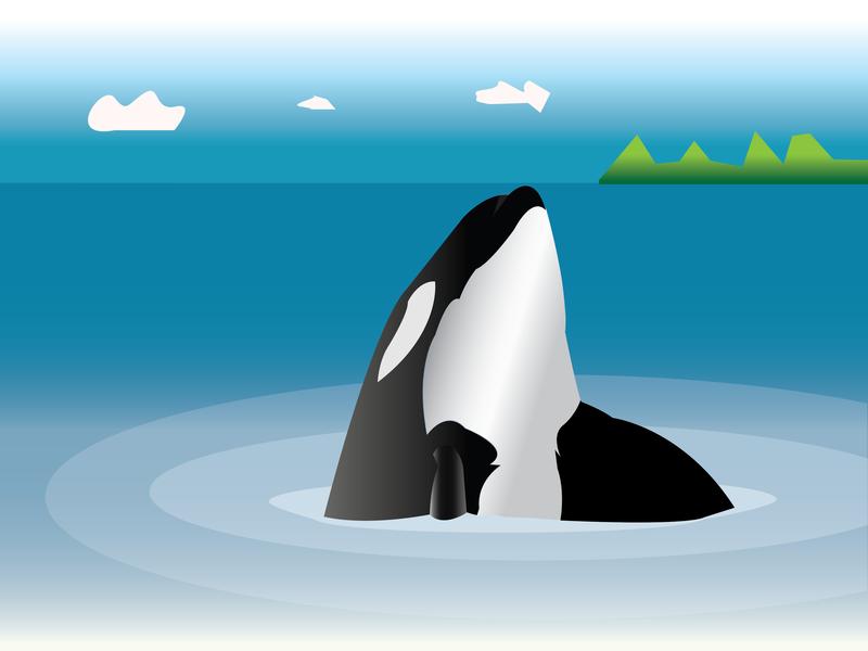 Orca Fish design illustrator illustration