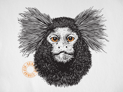 Marmoset Knock You Out Revised
