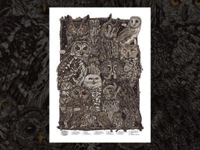 Owls of North America Print poster birds illustration owls
