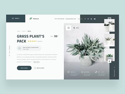 🌿🌱 Plantae — Product Page Concept 🏷️ plants ecommerce product page eshop website webdesign ux uidesign ui dailywebdesign dailyux dailyui
