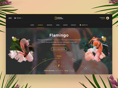 🌺🐹 National Geographic — Website Concept yellow nationalgeographic nature ui ux uidesign dailywebdesign dailyux dailyui black web webdesign website